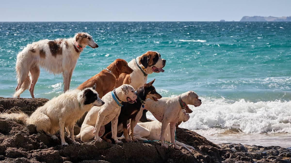 Noclegi dla psów w Nowej Zelandii, restauracje i miejsca do zabawy